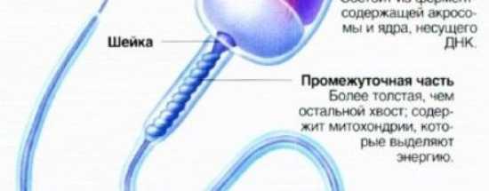 'Ошибка в генетическом коде: при каких показателях фрагментации ДНК мужчина может стать отцом