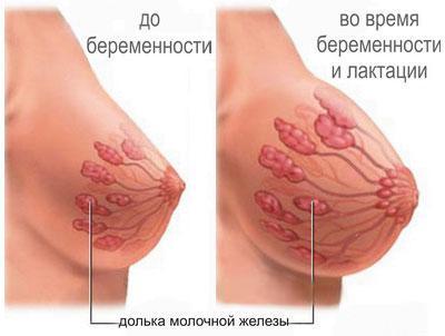 Грудь до и во время беременности