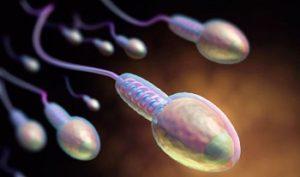 Время оплодотворения яйцеклетки у женщин