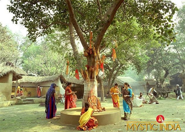 В Индии фикусу молятся