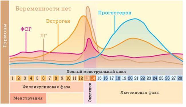гормональный фон менструального цикла