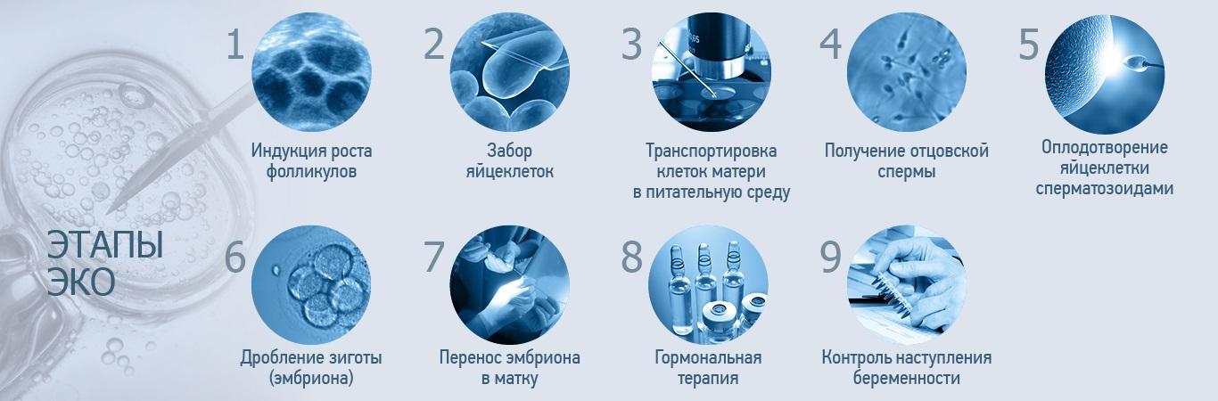 этапы проведения ЭКО