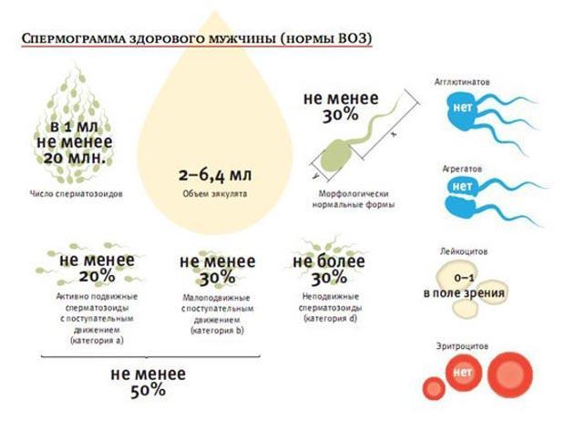 оценка спермы по нормам ВОЗ