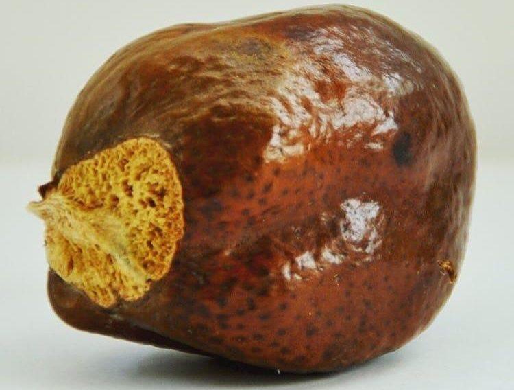 Мохилхин орех плод