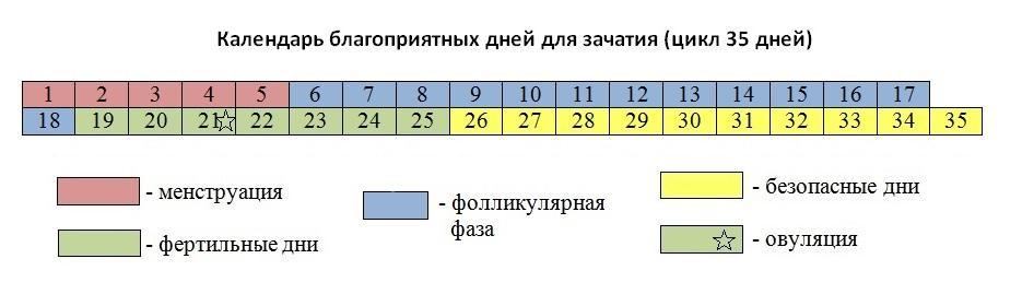 цикл 35 дней