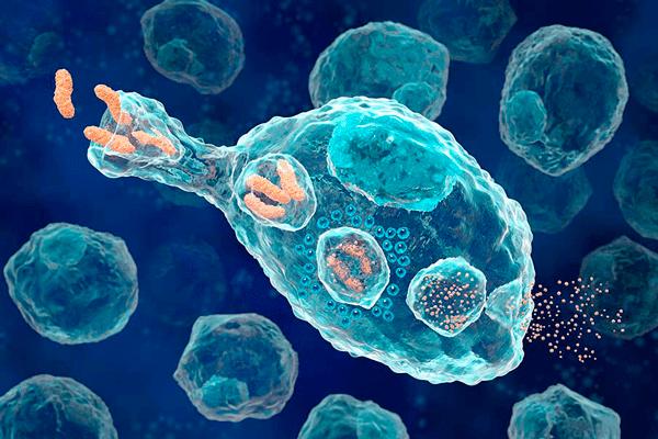 макрофаги и их присутствие в сперме