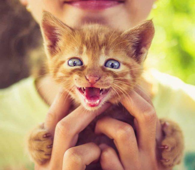 появление котенка и беременность